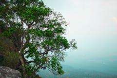 Bl?tter, Niederlassung und hoher Baum steht die Korbsau, die gen Himmel dominierend ist lizenzfreie stockbilder