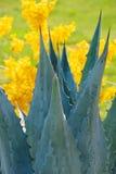 blå yellow Royaltyfria Foton