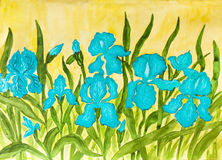 blåa irises Royaltyfri Bild