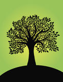 Blach tree silhouette Royalty Free Stock Photography