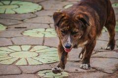 Black abandoned homeless stray dog is walking on the street. Lit Stock Photo