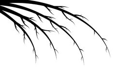 Black abstract beautiful branches, stems, lines on white background and place for copy space. Vector illustration Royalty Free Stock Photo