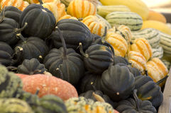 Black acorn squash Royalty Free Stock Photos