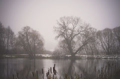 Black Adler trees in a mist, Riese, Vilnius district, Lithuania royalty free stock photo