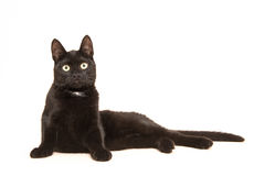 Black adult cat, lying in the floor uprising to sit up facing the camera. Isolated on a white background Royalty Free Stock Image
