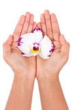 Black African American woman hand holding an orchid flower Stock Photos