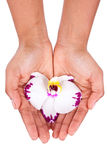 Black African American woman hand holding an orchid flower Stock Images