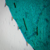 Black alga leaf micro Stock Photo