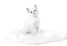 Black&white branco do gatinho foto de stock royalty free