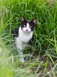 Black And White Cat In The Grass. Royalty Free Stock Image