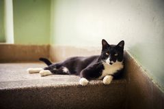 Black And White Cat Rest Of Stairs Stock Image