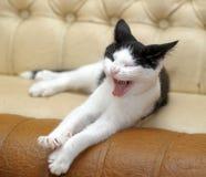 Free Black And White Cat Yawning Stock Image - 33510291