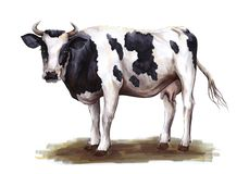 Free Black And White Cow Standing On The Grass Royalty Free Stock Photo - 137148055