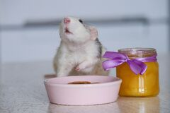 Free Black And White Cute Rat Eating Pancakes From A Pink Plate. A Jar Of Yellow Honey Stands Nearby. A Lilac Bow Is Tied To A Glass Co Royalty Free Stock Image - 192583926