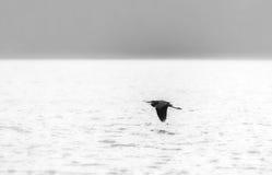 Free Black And White Heron Stock Photos - 21700463