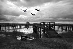 Black And White High Contast Birds Flying Over Lake With Wooden Royalty Free Stock Images
