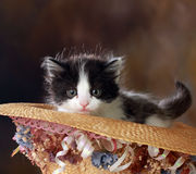 Black And White Kitten In Decorative Hat