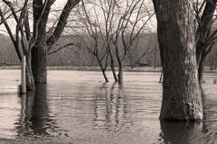 Black And White River And Trees Royalty Free Stock Photos