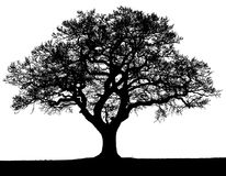 Free Black And White Vector Autumn Tree Silhouette. Royalty Free Stock Photography - 124763887