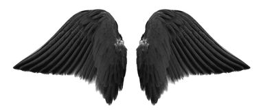 Black angel wings. Isolated on white background royalty free stock photo
