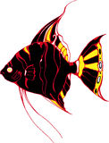 Black angelfish Stock Photography