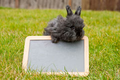 Black Angora Rabbit with Blank Chalkboard Royalty Free Stock Images