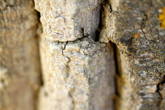 Black ant on bark in nature or garden Royalty Free Stock Photography