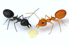 A black ant is confronted with an orange ant for the syrup. Stock Image