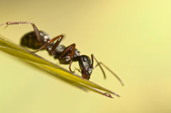 Black ant on green grass Stock Image