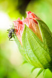 Black ant on red flower Stock Photo