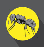 Black Ant Vector Royalty Free Stock Photos