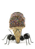 Black Ants Carrying Ice Cream Cone Royalty Free Stock Photography