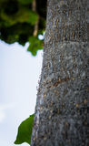 Black ants crawling on a tree trunk Stock Images