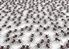 Black ants isolated on a white background Stock Image