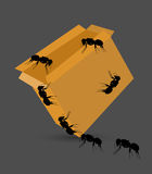 Black Ants on Packet Royalty Free Stock Photos