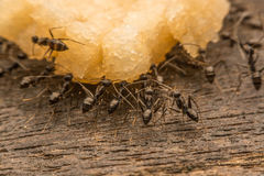 Black ants are spoiling food. Macro photo Royalty Free Stock Photo
