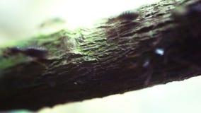 Black Ants Royalty Free Stock Image