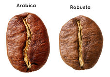 Black arabica, robusta coffee bean. Isolated on white background Royalty Free Stock Images