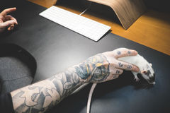 Black Arm Tattoo Holding White Mice Stock Images
