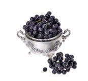 Black aronia  chokeberry  isolated Royalty Free Stock Photos