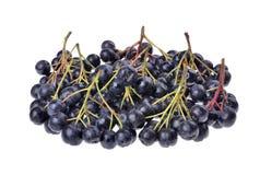 Black aronia  chokeberry  isolated Royalty Free Stock Image