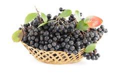 Black aronia. Cluster black aronia in basket on white  background Stock Photos