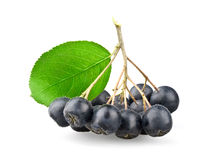 Black aronia with leaf Royalty Free Stock Photos