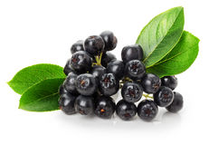 Black ashberry isolated on the white background Royalty Free Stock Images
