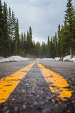 Black Asphalt Road With 2 Yellow Lining Surrounded by Snow and Pine Tress during Daytime Royalty Free Stock Photography