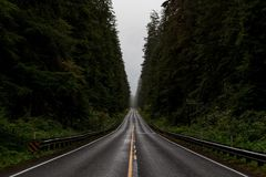 Black Asphalt Road Surrounded by Green Trees Stock Image