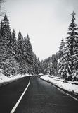 Black asphalt winding road in snowy forest. Leads to the mountains Stock Photography
