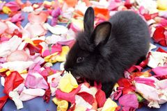 Rabbit on rose petals stock photo