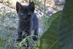 Black baby kitten Stock Images