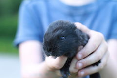 Black baby rabbit Royalty Free Stock Photos